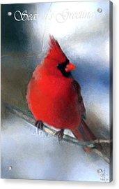 Christmas Card - Cardinal Acrylic Print
