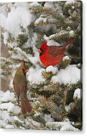 Christmas Card With Cardinals Acrylic Print