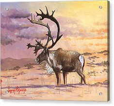 Christmas Caribou Acrylic Print by Jeff Brimley