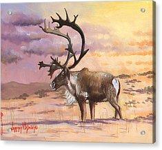 Christmas Caribou Acrylic Print