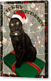 Christmas Cat Acrylic Print by Adam Romanowicz