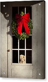 Christmas - Clinton Nj - Christmas Puppy Acrylic Print by Mike Savad