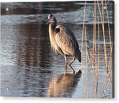 Christmas Day Greeting Acrylic Print by Allan Levin