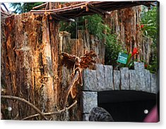 Christmas Display - Us Botanic Garden - 011310 Acrylic Print