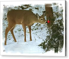 Christmas Doe Acrylic Print by Clare VanderVeen