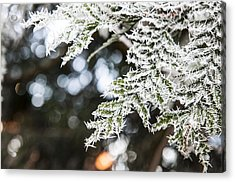 Acrylic Print featuring the photograph Christmas Frost by David Isaacson