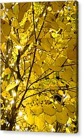 Acrylic Print featuring the photograph Christmas Lights by Julia Ivanovna Willhite