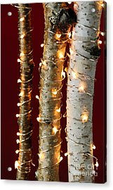 Christmas Lights On Birch Branches Acrylic Print