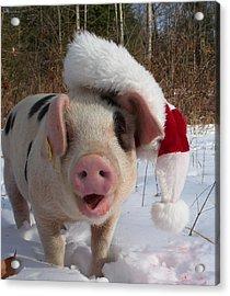 Christmas Pig Acrylic Print