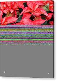 Christmas Poinsettia's Acrylic Print by Carol Toepke