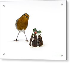 Christmas Robin Acrylic Print by Tim Gainey
