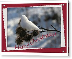Christmas Snow Bird Acrylic Print