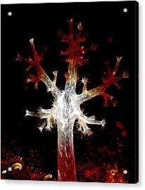 Christmas Acrylic Print by Sok wan andy Yeo