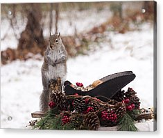 Christmas Squirrel Acrylic Print