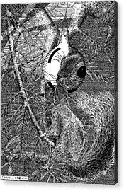 Christmas Tree Squirrel Acrylic Print