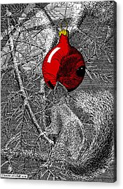 Christmas Tree Squirrel With Red Ornament Acrylic Print
