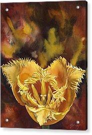 Christmas Tulip Acrylic Print by Alfred Ng