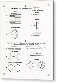 Chromosome Breakage Diagrams Acrylic Print by American Philosophical Society