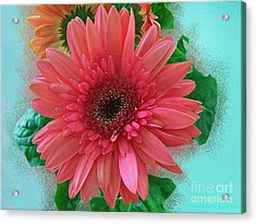 Acrylic Print featuring the photograph Chrysanthemum by Gena Weiser