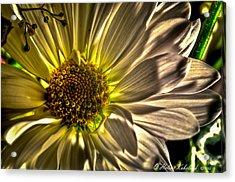 Chrysanthemum Acrylic Print by Helene Kobelnyk