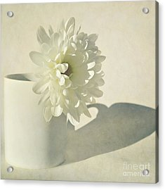 Chrysanthemum Shadow Acrylic Print by Lyn Randle