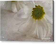 Chrysanthemum Textures Acrylic Print by John Edwards