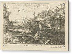 Chub, Squalius Cephalus On A Riverbank, Print Maker Albert Acrylic Print by Albert Flamen And Jacques Van Merlen