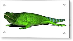 Chuckwalla Lizard Acrylic Print by Friedrich Saurer