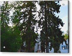 Church And Trees. Acrylic Print by Maegan Dann