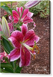 Acrylic Print featuring the photograph Cibuloviny Flower by Rose Wang