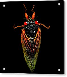 Cicada In Black Acrylic Print by R  Allen Swezey