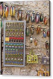 Cicada Souvenirs Acrylic Print by Pema Hou