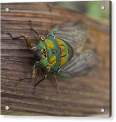 Green Whizzer Cicada Acrylic Print