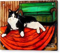 Cici The Cat Acrylic Print