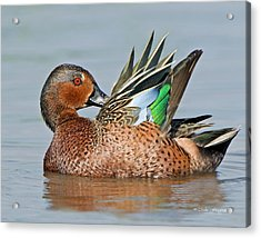 Cinnamon Spice Acrylic Print by Mike Fitzgerald