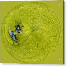 Circle Of Flies Acrylic Print by Jean Noren