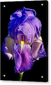 Cirrus Beauty 3 Acrylic Print