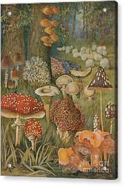 Citizens Of The Land Of Mushrooms Acrylic Print by Science Source