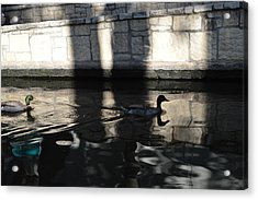 Acrylic Print featuring the photograph City Ducks by Shawn Marlow
