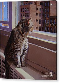 City Kitty Enjoys Her View Acrylic Print