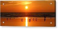 Clam Digging At Sunset - 2 Acrylic Print