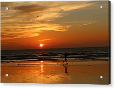 Clam Digging At Sunset - 3 Acrylic Print