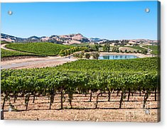 Classic Napa - Cuvaison Winery And Vineyard In Napa Valley. Acrylic Print by Jamie Pham