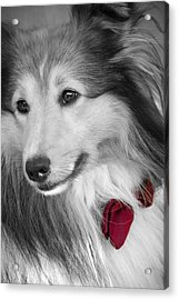 Classy Red Acrylic Print by Loriental Photography