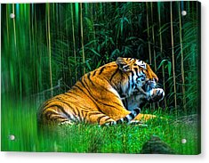 Clean Claws Acrylic Print by Glenn Feron