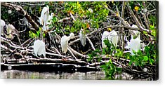 Cleaning Time Acrylic Print by Will Boutin Photos