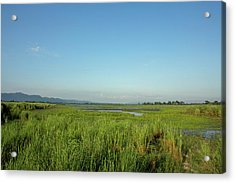 Clear Skies Over A Marsh In Kaziranga Acrylic Print