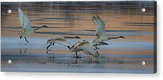 Cleared For Take Off Acrylic Print