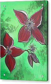 Clematis Burgundy Acrylic Print by Kathy Spall