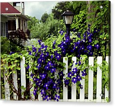 Clematis On White Picket Fence Painting Effect Acrylic Print by Tom Brickhouse